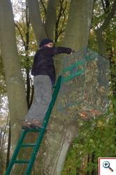 Wieszanie klatek akllimatyzacyjnych na drzewach